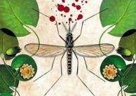 Komarzyce: smakoszki naszej krwi