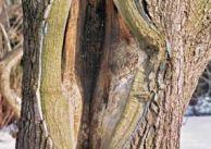 Co mówią drzewa?