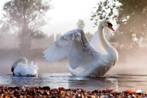 Magiczne zwierzęta: ptaki - symbol duszy