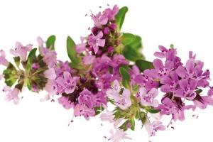Woda kwiatowa z macierzanki