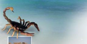 Klątwa skorpiona