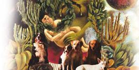 zwierzęta, miłość, Katarzyna Piekarska, przyroda, psy, wegetarianizm, posłanka
