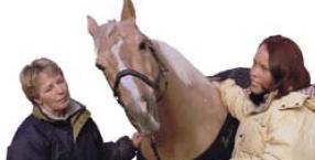zwierzęta, pies, kot, koń, komunikaty od zwierząt, Kirsten Helming