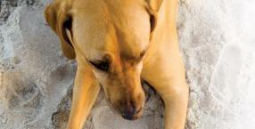 zwierzęta, psy, przewodnicy, psy ratownicze