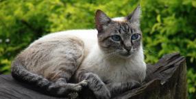 zwierzęta, koty, felinoterapia