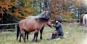 zwierzęta, miejsce na ziemi, konie, Danek Ciupiński