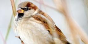 zwierzęta, ptaki, Dorota Sumińska, wiosna