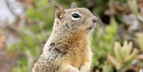 zwierzęta, przyroda, wiewiórka