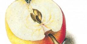zaświaty, bogactwo, symbole, wierzenia, ludowe wierzenia, nieśmiertelność, owoce, jabłko