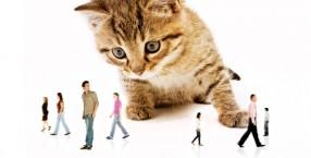 zwierzęta, pomoc, opieka nad zwierzętami, koty