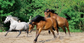 zwierzęta, hipoterapia, konie, Centaurus, fundacja, organizacja pożytku publicznego, animatarapia