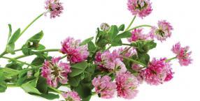 rośliny, warzywa, zioła, Łukasz Łuczaj, rzeżucha, zielnik, koniczyna, rzepak, łąka