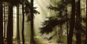 symbole, drzewa, las, język symboli