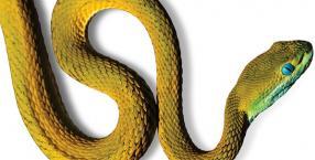 zwierzęta, Wąż, symbol