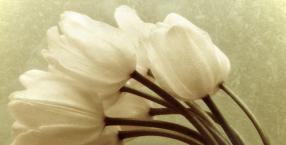 przeznaczenie, karty, kwiaty, miłość