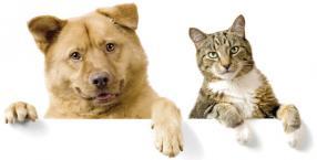 zwierzęta, horoskop, prognoza, magiczne zwierzę, maj 2012, pies kot, pupil, zwierzę