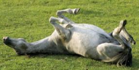 zwierzęta, góry, koń, wakacje, konie, Bieszczady, Solina, przygoda, podróż, zwierzę