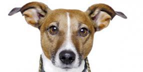 pies, magiczny świat zwierząt, zwierzę