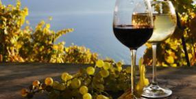 wino, symbol, język symboli, rośliny lecznicze, winorośl, winogrona