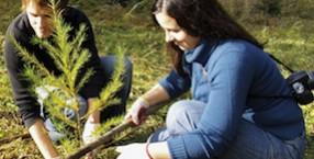 ekologia, las, ekowybór, drzewo, Fundacja Aeris Futuro, Czas na Las, drzewa