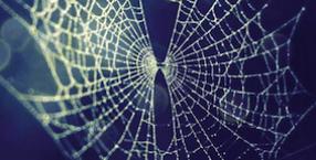 szczęście, symbole, pech, język symboli, pająk