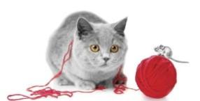 rodzina, mądrość zwierząt, mieszkanie, dom, kot, magiczny świat zwierząt, zwierzęta domowe