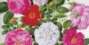 fiolet, przyjaźń, lato, Matki Boskiej Zielnej, kalendarz, bransoletka, sierpnień, perseidy