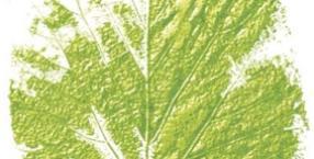 ekologia, kosmetyki naturalne, eko-wybór, w zgodzie z naturą, ekowybór, DIY, naturalne sposoby, eksperyment