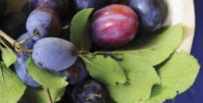 fiolet, śliwki, bakłażan, bez, obiad, ciasto, kuchnia, zdrowie