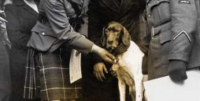 fot. GETTY IMAGES, DIOMEDIA, WWW.DEFENCEIMAGERY.MOD.UK/WIKIMEDIA COMMONS Pointer o imieniu Judy został uhonorowany medalem Dickin przez wicehrabiego Tarbatu 2 maja 1946 roku w Londynie