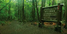 Japonia,las, Aokigahara,samobójstwo,las samobójców,tajemnice,niezwykłe miejsca
