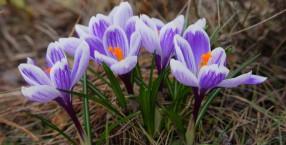 są pierwsze kwiatki