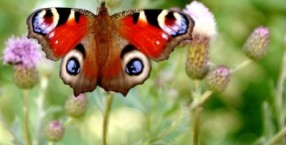 M jak motyl