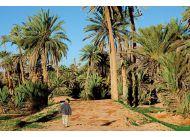 Kajtek wchodzi do oazy daktylowej w Tarmguist