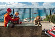 Złodzieje kanapek na Gibraltarze