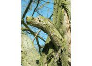 Co mówią drzewa? fot. Leszek Marek Krześniak