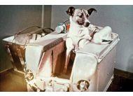Łajka, jeden z najsłynniejszych psów świata, poleciała w kosmos (i zginęła) 3 listopada 1957 r.