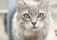 Medytacje z kotem