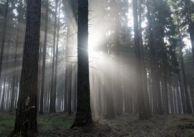 Uleczy cię szept lasu