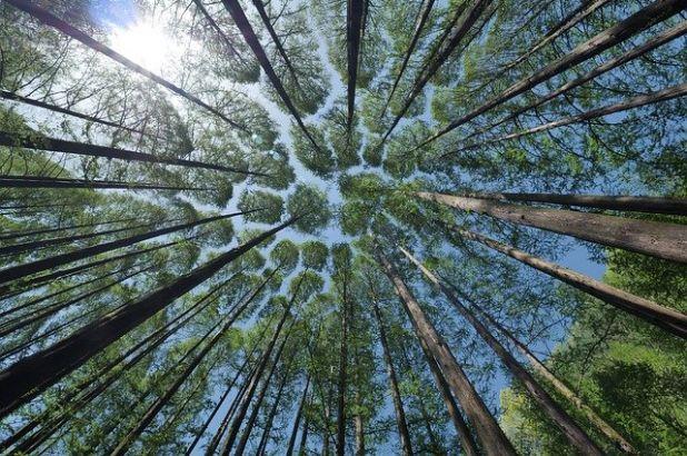 Pięć drzew które leczą