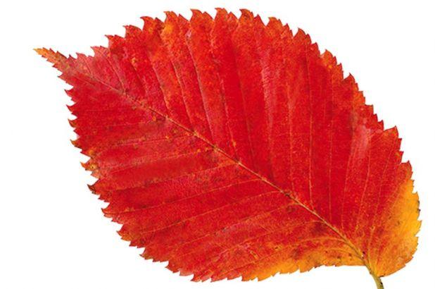 Tajemnice jesiennych liści