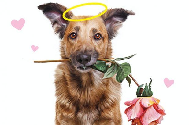 Bezwarunkowa miłość psa