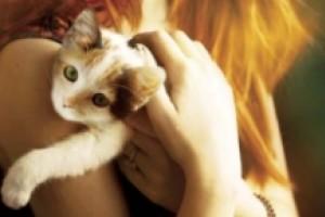 Okład z kota