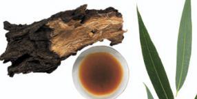 zioła, wierzba, medycyna alternatywna, odwar z kory, okład z gorczycy