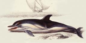 cywilizacje, delfiny