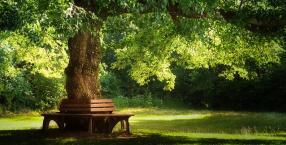 energia, obrzędy, drzewa, znaczenie drzew, sok z brzozy, przytulanie drzew, drzewo