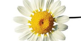 Miłosny kwiatek