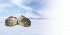 Antarktyda, foki, zwierzęta
