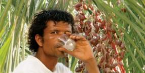 palma daktylowa, legmi, trunek, magiczny napój