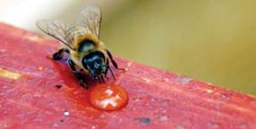 miód, pszczoły, pszczelarstwo, Ryszard Sułkowski, pasieka, pyłek, pierzga